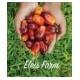 Eleis Farm