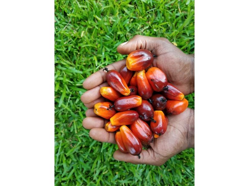 Eleis Farm Palm Oil